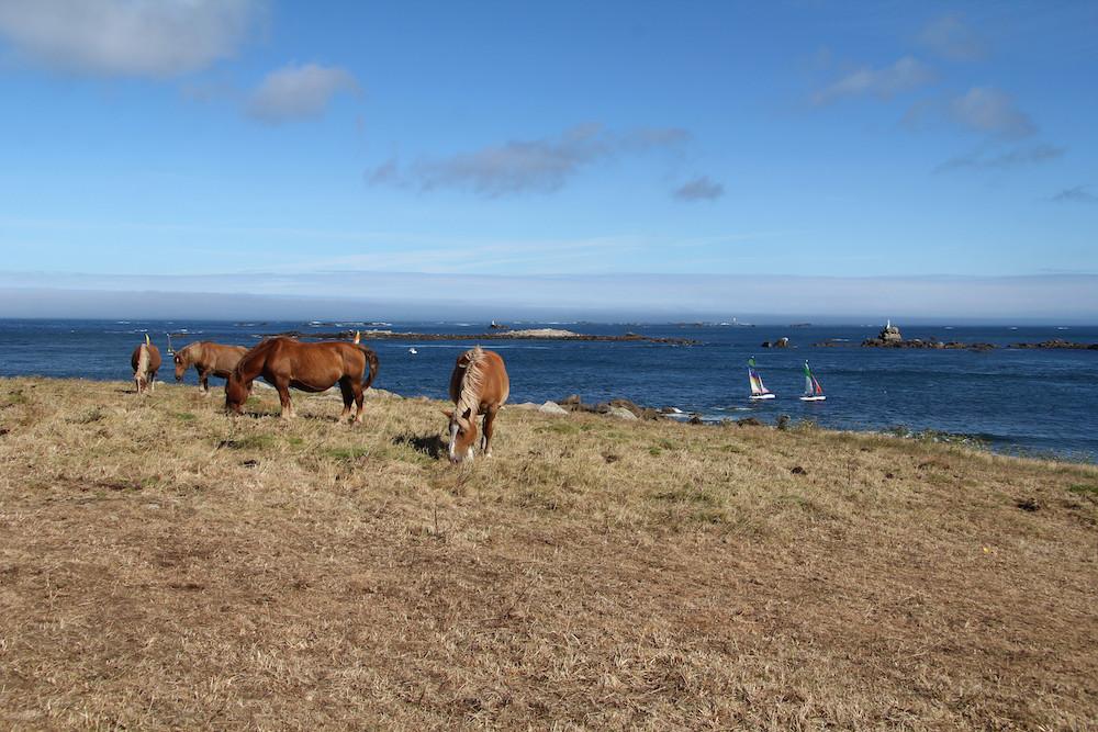 route touristique de Landunvez - chevaux