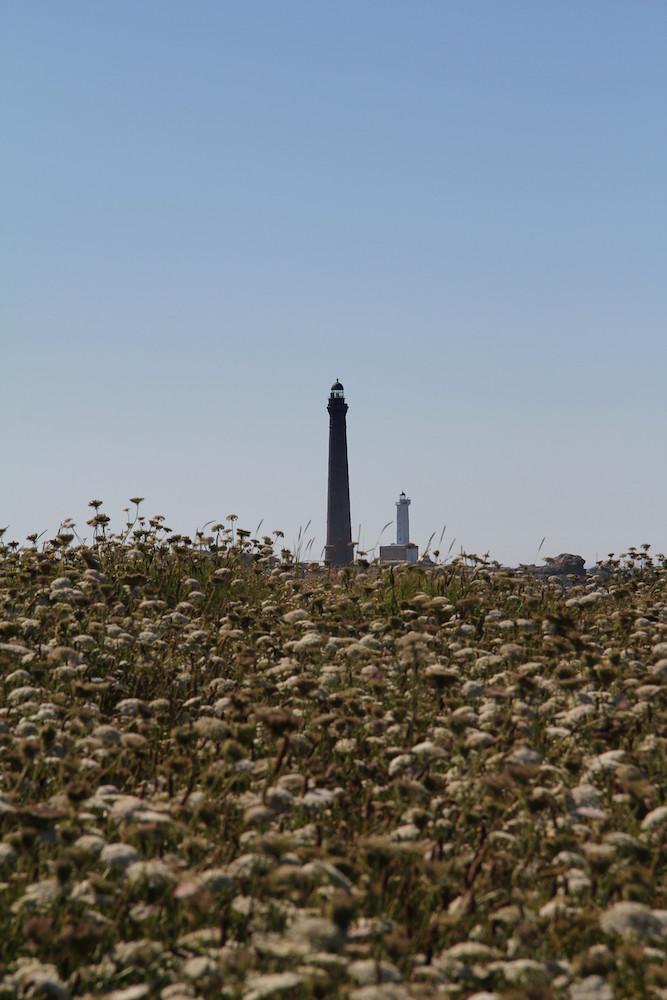Phare de l'Ile Vierge fleuri
