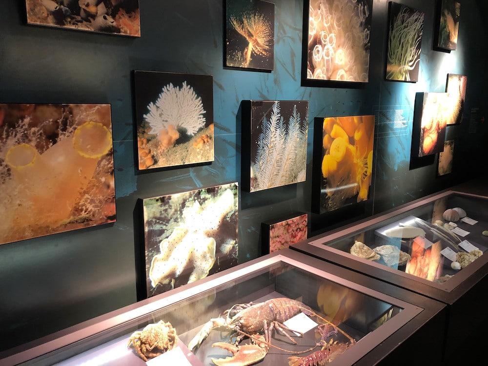 Le musée - marinarium de Concarneau