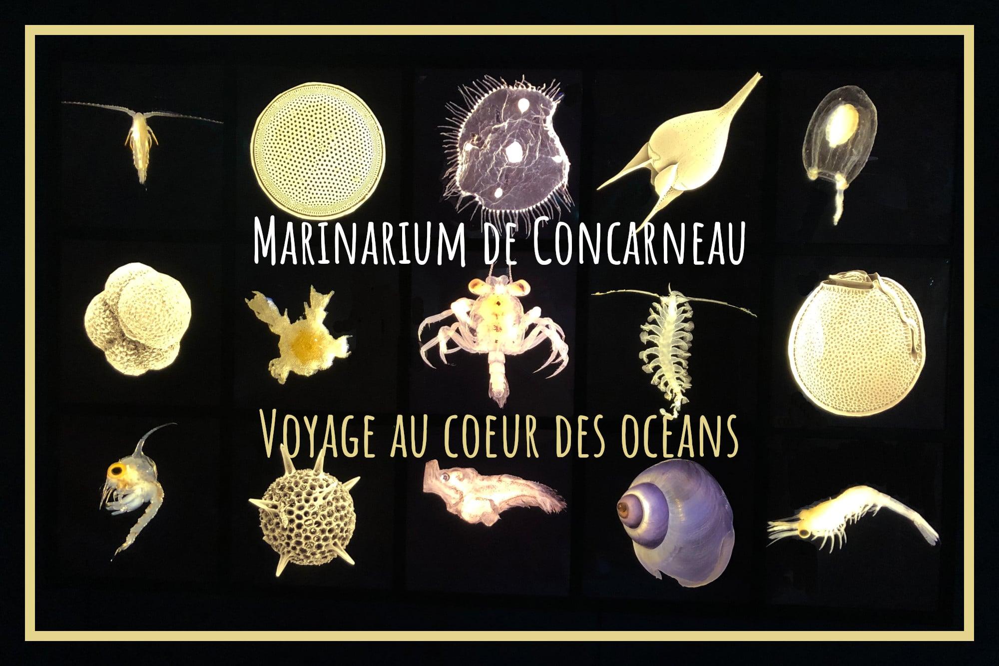 You are currently viewing Marinarium de Concarneau