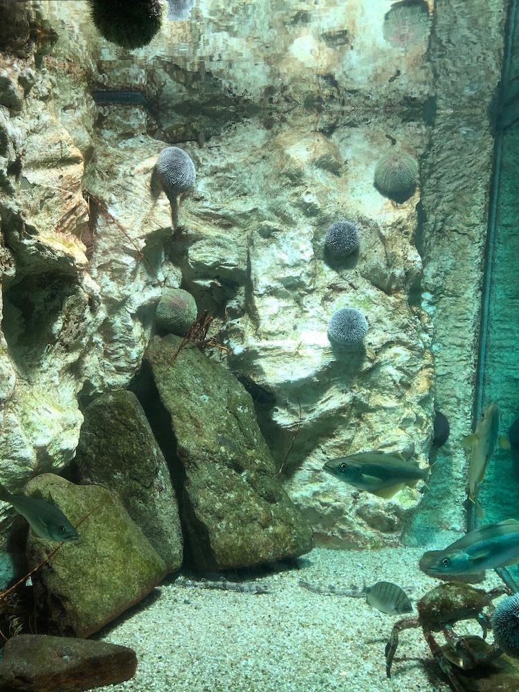 aquarium du marinarium